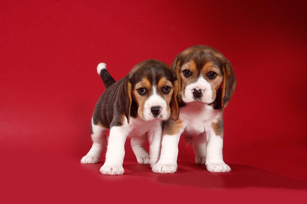 Die 7 Todsünden der Hundeerziehung