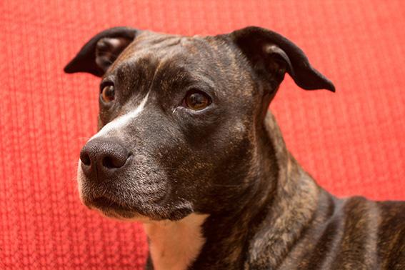 Die 50 beliebtesten Hunderassen in Deutschland